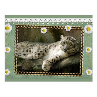 bcr-snow-leopard-st-patricks-0076 postales