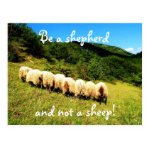 Be a shepherd and not a sheep postcard