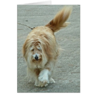 BE- Bearded Collie Notecards Card