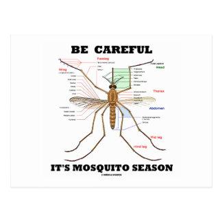 Be Careful It's Mosquito Season (Mosquito Anatomy) Postcard