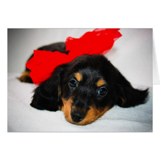 Be Mine Dachshund Puppy Valentineu0026#39;s ...