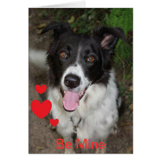 Be Mine Valentine from the Border Collie Dog Cards