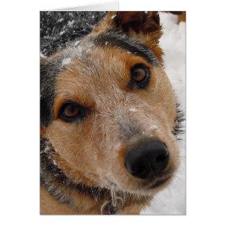 Be My Valentine - Cattle Dog Puppy Card