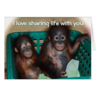 Be My Valentine Sweet Baby Animal Photo Card
