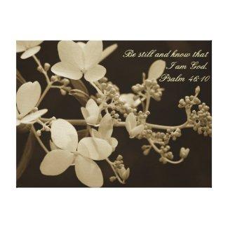 Be Still Garden Hydrangea