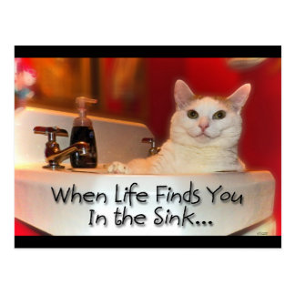 Be The Best Cat In Sink Postcard