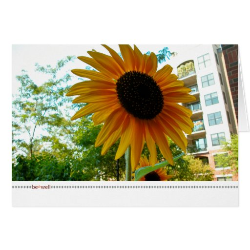 be*well_sunny plaza photograph card