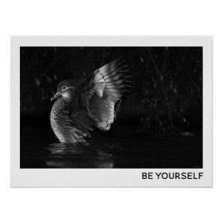 Be Yourself Female Mandarin Duck Black White Photo Poster
