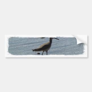 BEABIR Beach Birdie Bumper Sticker