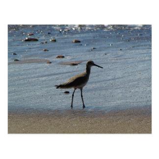 BEABIR Beach Birdie Postcard