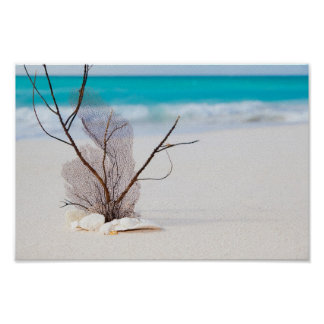 beach-and-sea-concept beach beauty blue caribbean poster