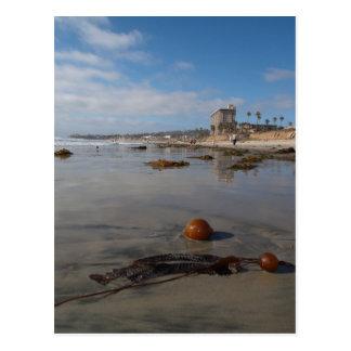 Beach and seaweed postcard