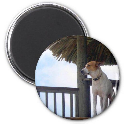 Beach Bar Dog in Belize 2 Inch Round Magnet