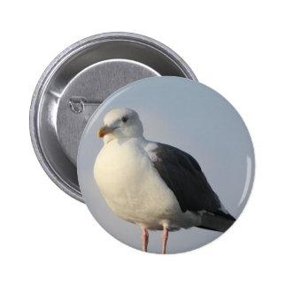 Beach Bird Seagull Buttons