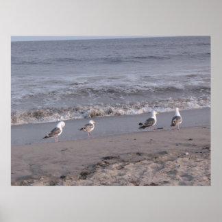 beach birds posters