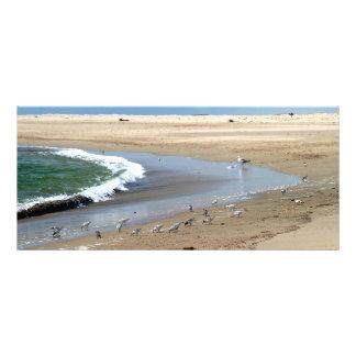 Beach Birds Rack Card