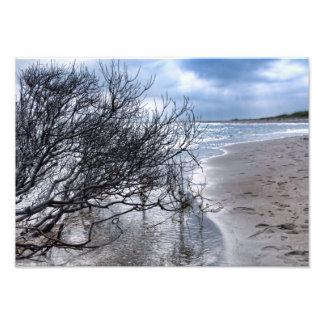 Beach Branch Photo Print