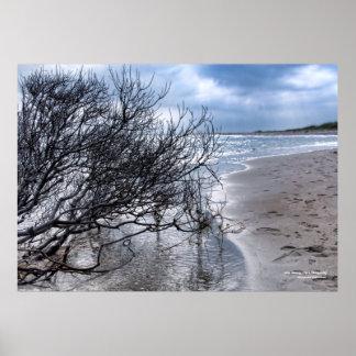 Beach Branch Poster