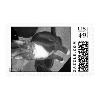 Beach Bum Kitty (B&W) Postage Stamp