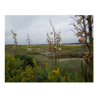Beach Clouds and Wildflowers - Oak Island, NC Postcard
