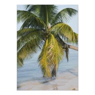 Beach, coconuts, islands card