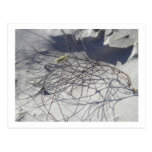beach debris post cards