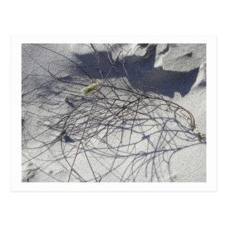 beach debris postcard