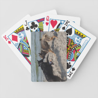 Beach Dogs Playing cards