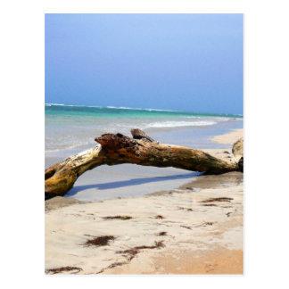 Beach drift wood postcard
