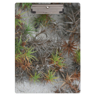 beach dune plants sand in Florida Clipboard