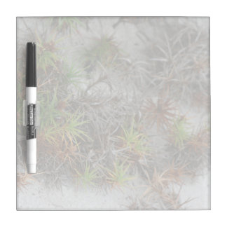 beach dune plants sand in Florida Dry Erase Board