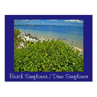Beach  / Dune Sunflower postcard or invitation
