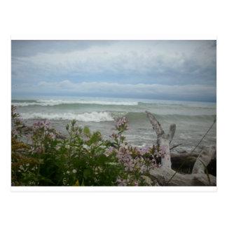 Beach Flowers Postcard