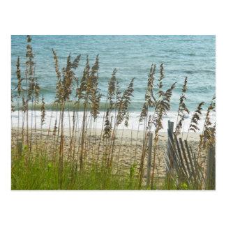 Beach Grass and Ocean Waves Postcard
