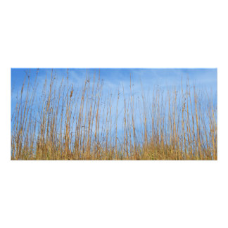 Beach Grass by Shirley Taylor Rack Card