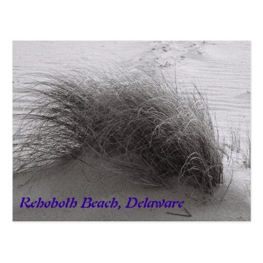 Beach Grass Rehoboth Postcard