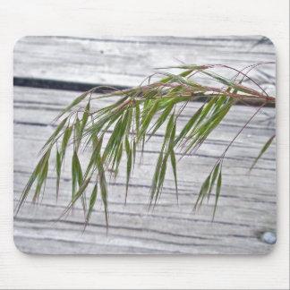 Beach Grass Seeds at IBSP Mousepad