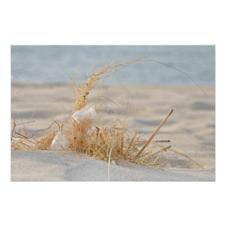 Beach Grass with feather Poster