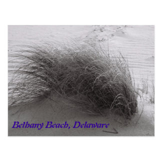 Beach Grasss Bethany Postcard