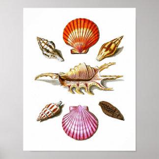 Beach House Decor Sea Shell Art Prints no. 14 Print
