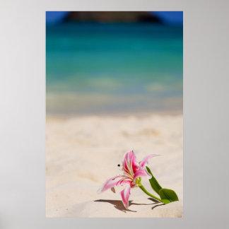 Beach Lily 24x36 art print