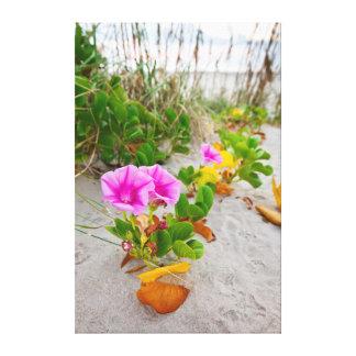 Beach Morning Glory (Ipomoea Stolonifera) Canvas Print