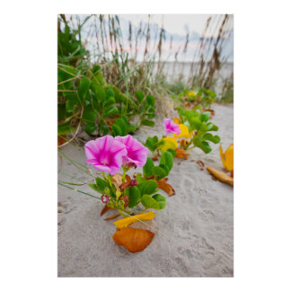 Beach Morning Glory (Ipomoea Stolonifera) Poster