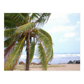 Beach of Dorado with Palm Postcard
