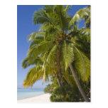 Beach on One Foot island, Aitutaki, Cook Islands Postcard