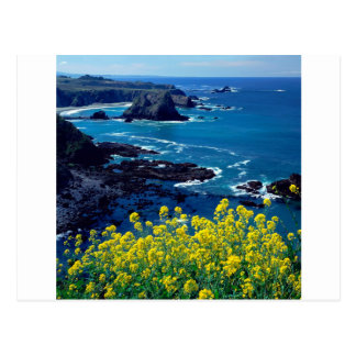 Beach Pacific Coastline Wildflowers Mendocino Postcard