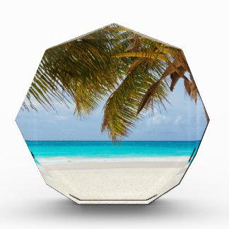 beach palm branches tree tropical island sand sea award