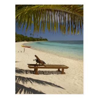 Beach, palm trees & lounger postcard