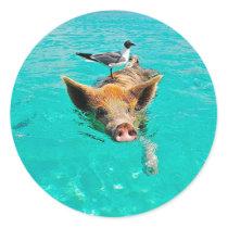 Beach pig - water pig classic round sticker