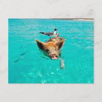Beach pig - water pig postcard